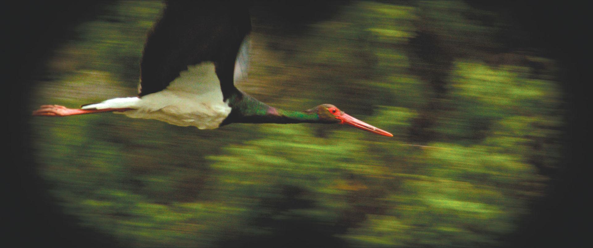 ornitologo spoutnik