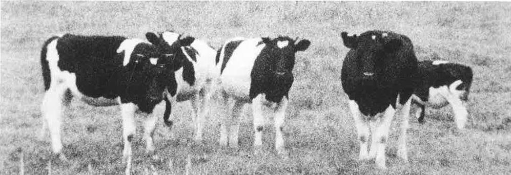 SPOUTNIK 1968 JANVIER WERNER NEKES